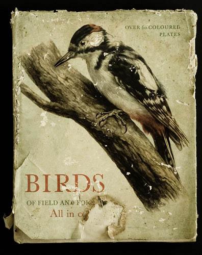 Book_-_Birds_00044.jpg