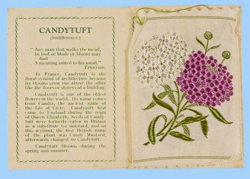 Candytuft_Card_-_No_114.jpg