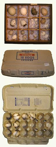 Archive_no_00127_eggs.jpg