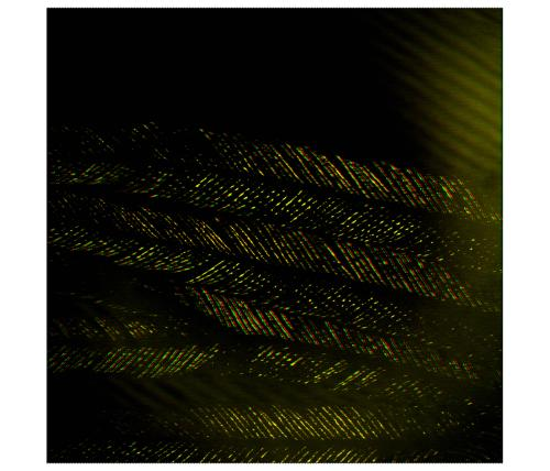 0007-feather.jpg