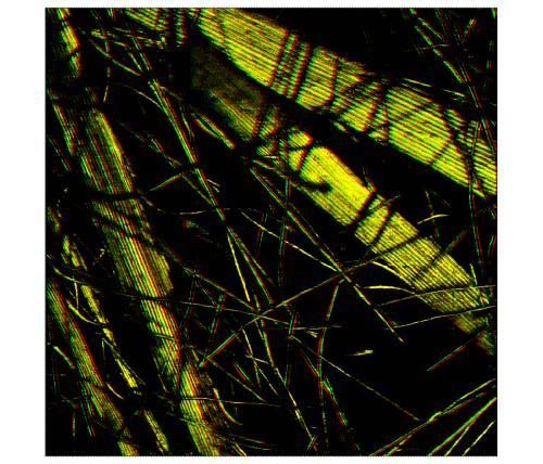 0031-c-cardoon_seed.jpg